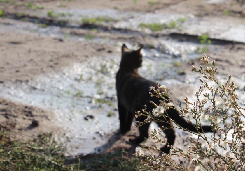 Cal Tudela Cat
